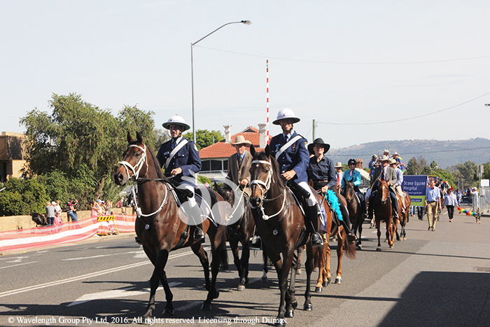NSW Mounted Police: Senior Constable , James Faox on 'Hollywood' and Senior Constable, Pat Condon on 'Warrigal' in the Scone Horse Parade.