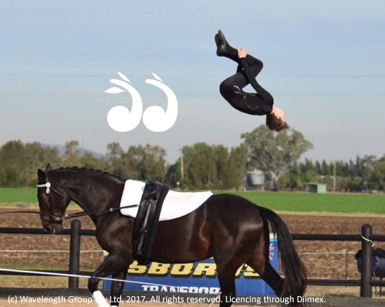 Justin Boyle performing a back somersault dismount at the Osbornes Transport Horse Festival Vaulting Competition last year.
