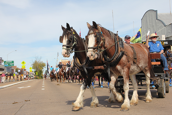 The St Helier's Heavy Horse Field Day will be held on May 20 and 21 this year, with up to 100 Clydesdale and heavy horses competing.