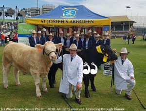 Fourth place in the junior steer competition with a steer from Graham and Kim Clydsalde from Rouchel. Adam Simpson and Bailey Anderson with the steers.