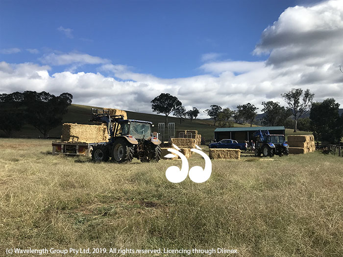 Hay being delivered at Timor yesterday.
